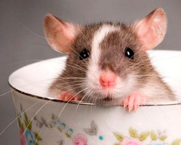 Soñar con ratón