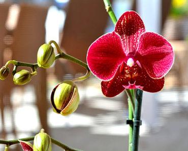 Soñar Con Orquídea