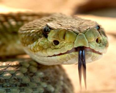 Soñar Con Serpiente