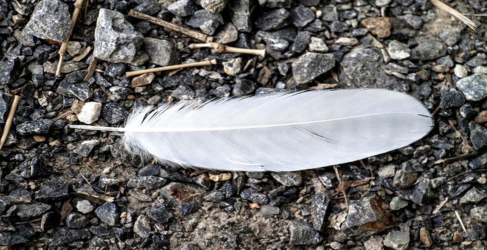 soñar con pluma